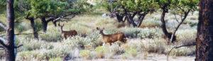 Sunshine Method Peaceful Deer Friends in Apple Trees